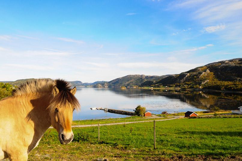 hest sommer