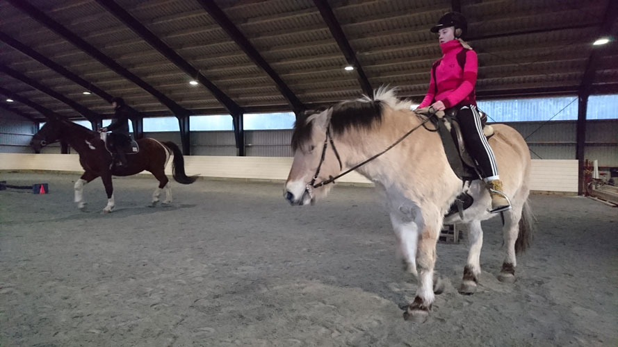 ridning hest