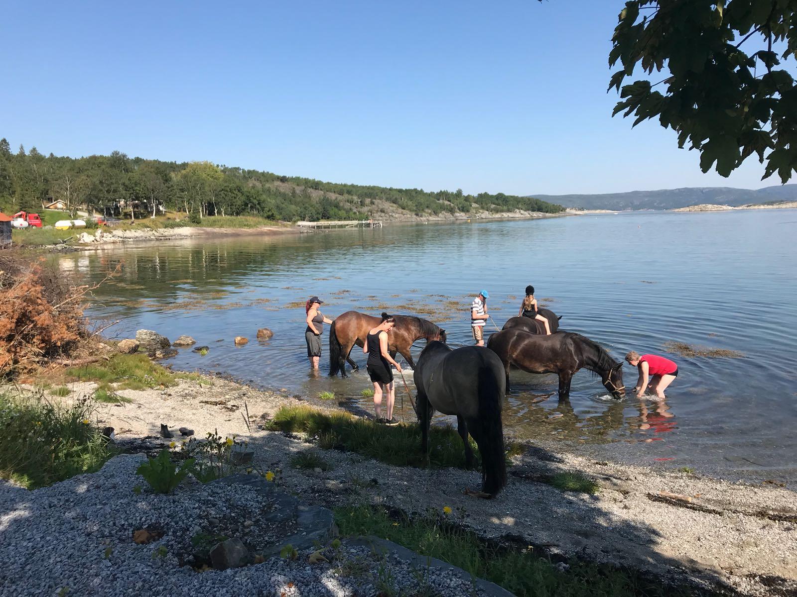 bading med hest